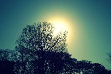 太陽と木々