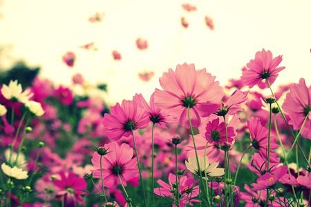 ピンク~♪