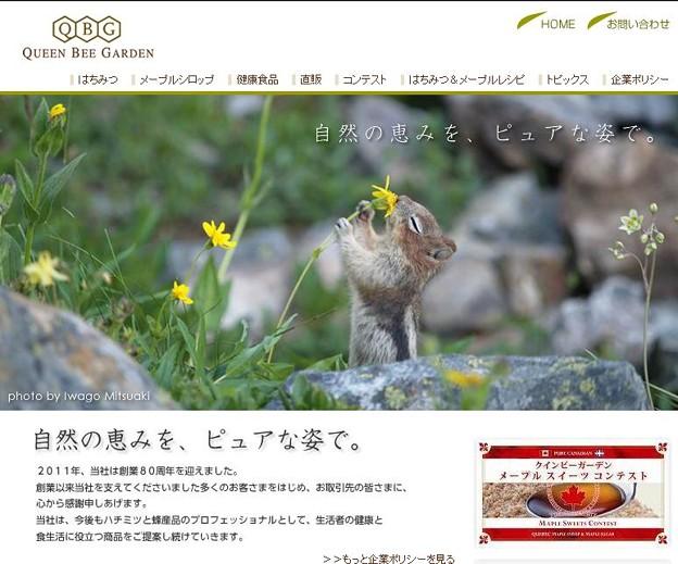 写真: www.qbg.co.jp
