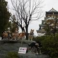 20140301大阪城梅林柴犬オフ会
