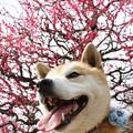 20110312 大阪城梅林撮影会