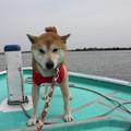201105015浜名湖柴犬オフ会