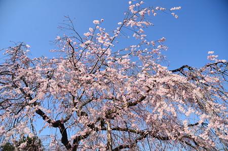 春の空に染まって