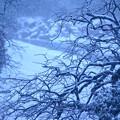 雪降ってる
