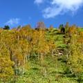 写真: 志賀高原にて