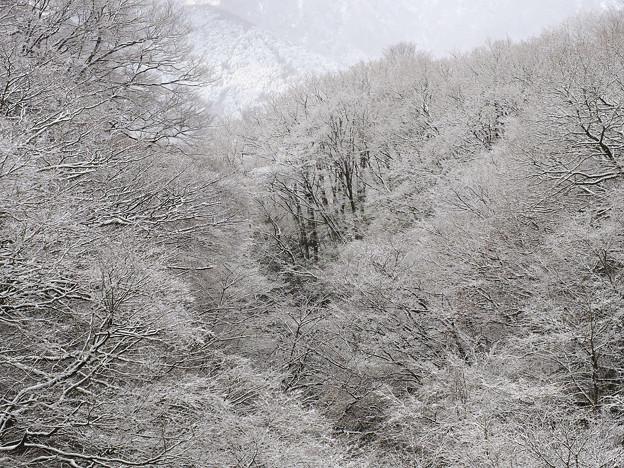 140110_箱根・小塚入口_着雪枯木風景_F11014085_MZD60M_X5As