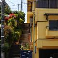 写真: 20110508_[秒速5センチメートル]参宮橋_014