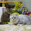 Photos: 飼い猫(2)