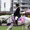 写真: 川崎競馬の誘導馬06月開催 あやめVer-120611-02-large