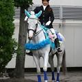 写真: 川崎競馬の誘導馬06月開催 紫陽花Ver-120611-02-large