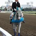 写真: 川崎競馬の誘導馬06月開催 紫陽花Ver-120611-06-large