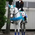 写真: 川崎競馬の誘導馬06月開催 紫陽花Ver-120611-20-large