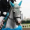 写真: 川崎競馬の誘導馬06月開催 紫陽花Ver-120611-25-large