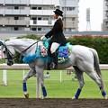 写真: 川崎競馬の誘導馬06月開催 紫陽花Ver-120611-23-large