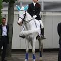 写真: 川崎競馬の誘導馬06月開催 初心者マークVer-120615-03-large