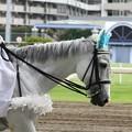 写真: 川崎競馬の誘導馬06月開催 初心者マークVer-120615-13-large