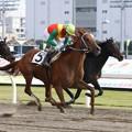 写真: 121105川崎01R週刊Gallop盃 優勝コードナンバー