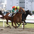 121105川崎01R週刊Gallop盃 優勝コードナンバー