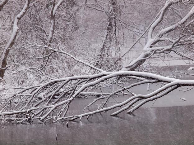 雪景色 A