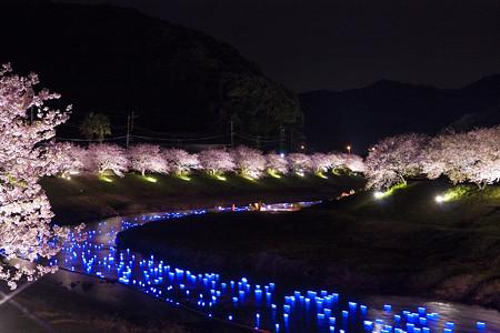 みなみの桜 ライトアップ
