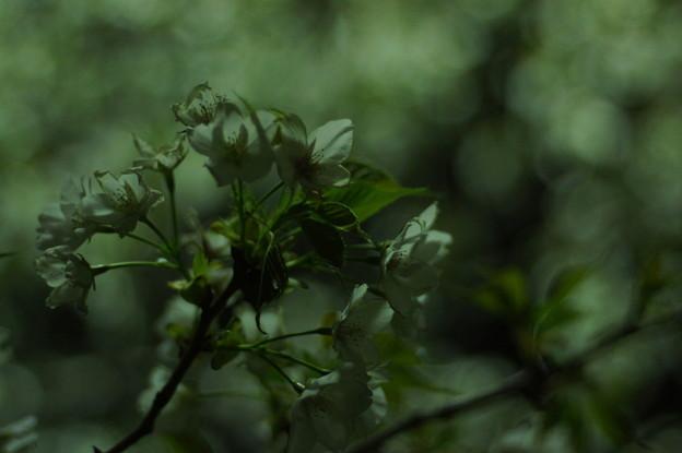 Photos: 闇夜の中でほの白く