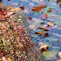 写真: カラフルな秋