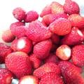 Photos: いちご苺イチゴストロベリー…