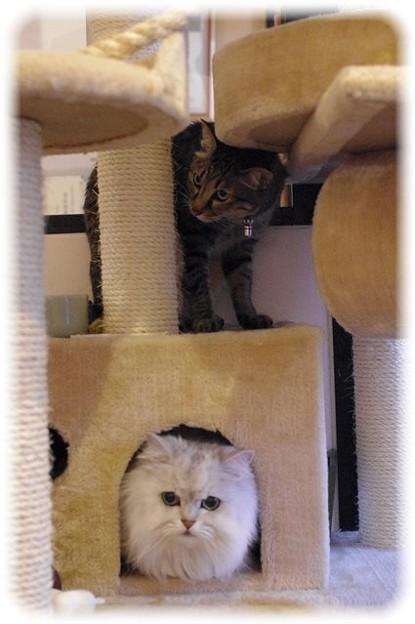 くびだけ猫