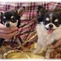 Photos: 看板犬s