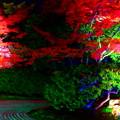 Photos: 圓徳院夜の庭園^^ 昼間と...