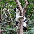 ××もおだてりゃ木に登る