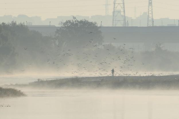 川霧に群れ飛ぶ