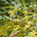 花ほころび鳥あそぶ《啓蟄の候》