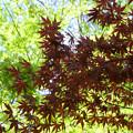 新緑と春紅葉《清明の候》