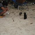 Photos: ねこビーチ