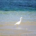 Photos: 鳥海さん