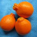 ミネラオレンジ