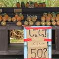 Photos: パインの無人販売