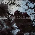 Photos: P3440964