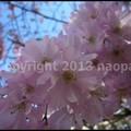 Photos: P3460971