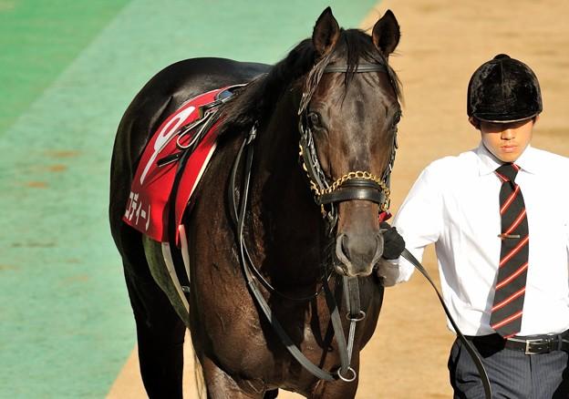 09b_コディーノ「秋からは古馬に負けないように頑張ろうと思います」【131006東京11R毎日王冠】