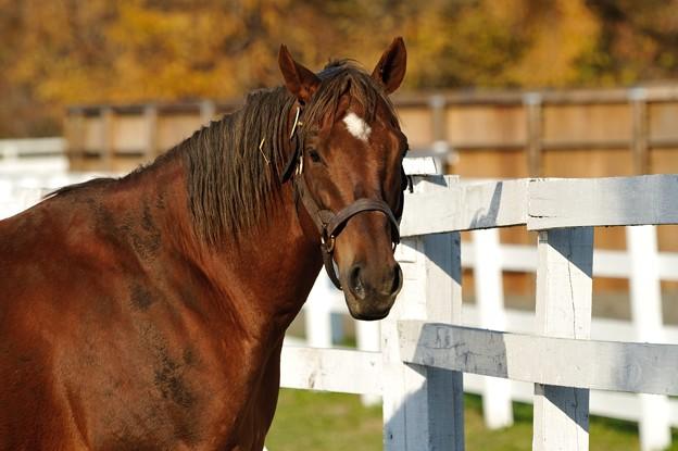 レックスに入って一番最初に会う馬なので人懐こいのか? #スクリーンヒーロー