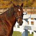 Photos: レックスに入って一番最初に会う馬なので人懐こいのか? #スクリーンヒーロー