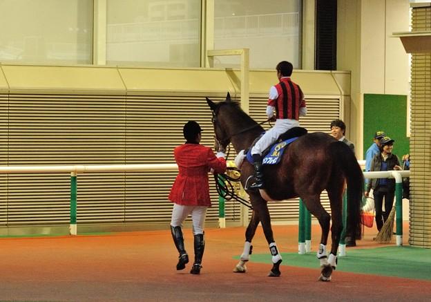 このあと宇都宮大学の乗馬部に向かうとのことです。福島に別れを告げて。 #ウインブレイズ #誘導馬