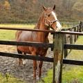 Photos: 道路の向かいの牝馬をみているジャッピー