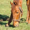 Photos: この馬は朝日が似合う。ローエングリン