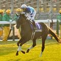 ?Verxina(JPN)&Y.Iwata #japancup #horseracing