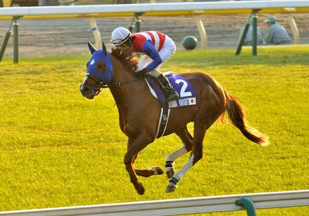 ?Nakayama Knight(JPN)&Y.Shibata #japancup #horseracing