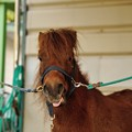 Photos: 名前はかわいいけど、セン馬ですからね