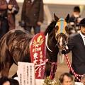 Photos: [東京大賞典2013]表彰式準備をしているタルマエ